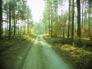 Die meisten Waldwege sind sehr gut ausgebaut
