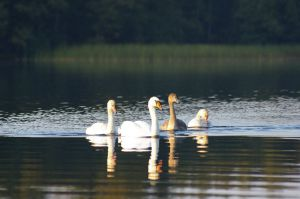 Nachwuchs am Plautziger See