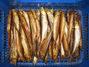 Geräucherte Maränen, eine absolute Delikatesse, in den Fischgeschäften in Olsztynek erhältlich.